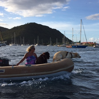dogs-in-dinghy